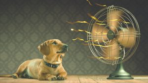 stay cool without airconditioner